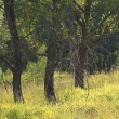 Деревья - Таруса. День в августе 2011 - Волошины.РФ
