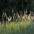 Метелочки на солнце - Таруса. День в августе 2011 - Волошины.РФ