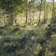 Поросль на закате - Таруса. День в августе 2011 - Волошины.РФ