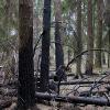 Локальное возгорание - Весна в Балашихе - Волошины.РФ