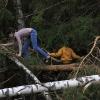 Лесной переполох - Весна в Балашихе - Волошины.РФ