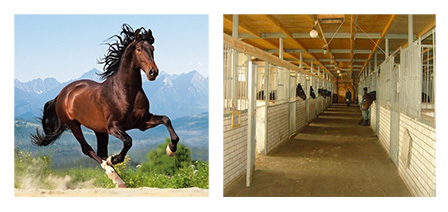 где живет конь