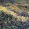 Живопись травы