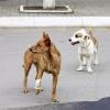 Городские собаки
