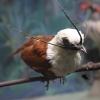 Поразительная птичка