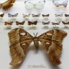 Огромная бабочка
