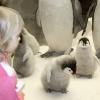 Пингвинятки