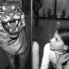 Клыки тигра