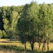 Деревца - Таруса. День в августе 2011 - Волошины.РФ