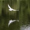 Отражение - Фотоохота в парке - Волошины.РФ