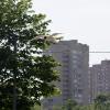 Реактивная чайка - Фотоохота в парке - Волошины.РФ