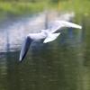 Белый цвет - Фотоохота в парке - Волошины.РФ