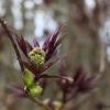 Цвета наоборот - Весна в Балашихе - Волошины.РФ